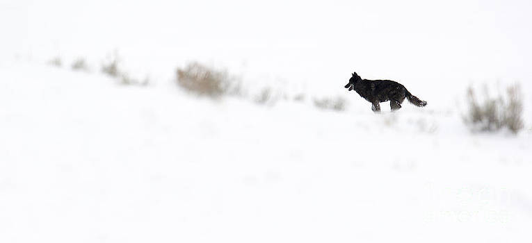 Running through the Snow by Deby Dixon