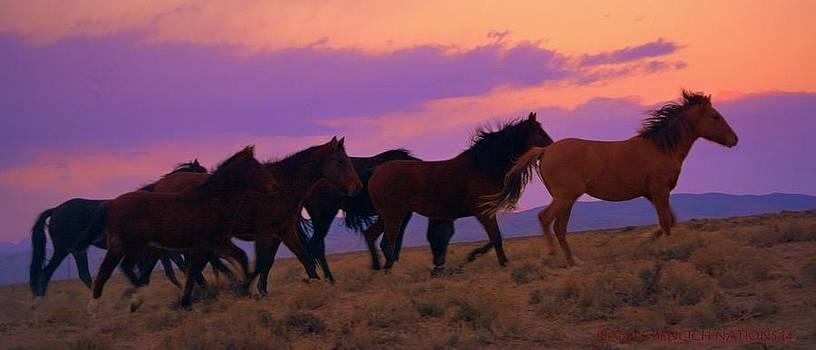Running Wild Running Free  by Jeanne  Bencich-Nations