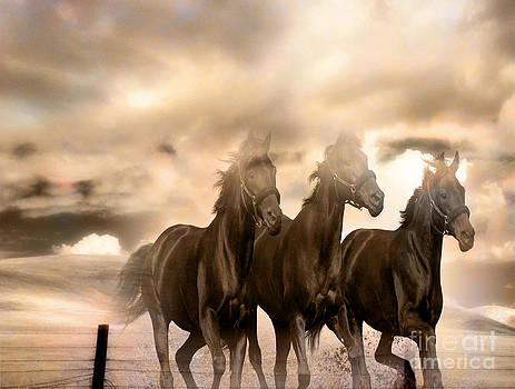 Running Wild by Yanni Theodorou
