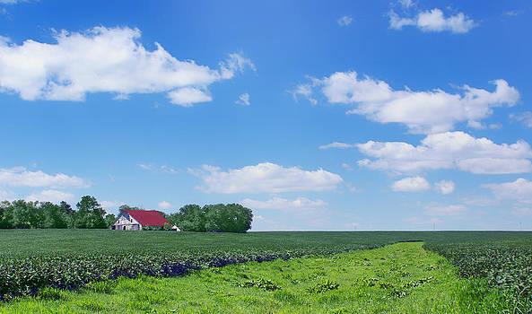 Nikolyn McDonald - Rural Midwest - Summer