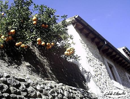 Rural Orange House by Cibeles Gonzalez
