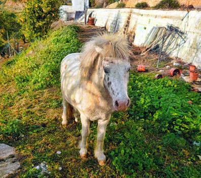 Rural Pony by Dami Munoz