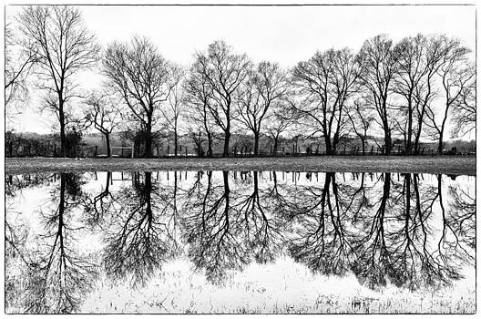 Rural Reflections by Ron Plasencia
