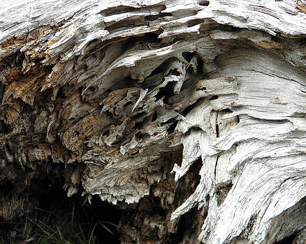 Rushing Wood by Laurie Klein