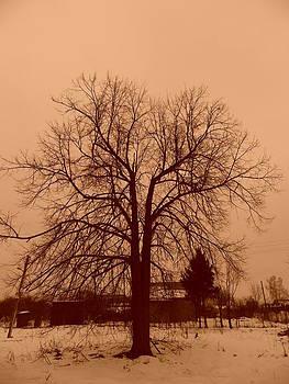 Russian Tree by Ivan Gomez
