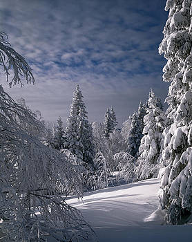Russian Winter Forest in Mountain by Efim Chernov