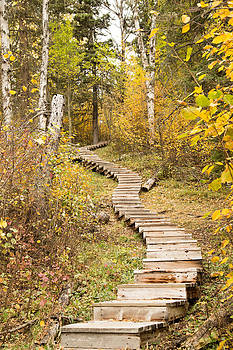 Rustic Stair Climber by Gerald Murray Photography