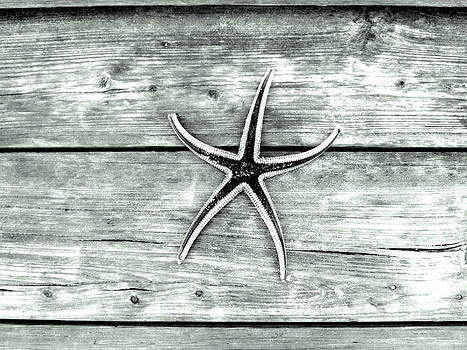 Starfish Series 1 of 5 by May Photography