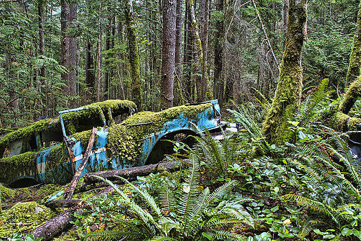 Peggy Collins - Rusty Old Car in the Forest