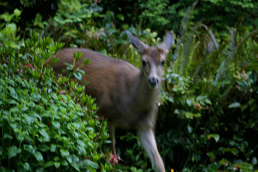 Rut Row the chase is on by Kym Backland