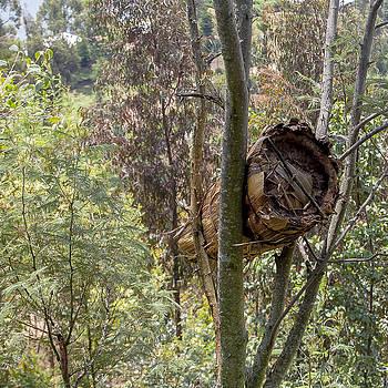 Rwandan Beehive by Paul Weaver