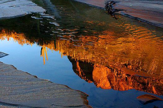 Sabino Canyon Reflection by Reed Rahn