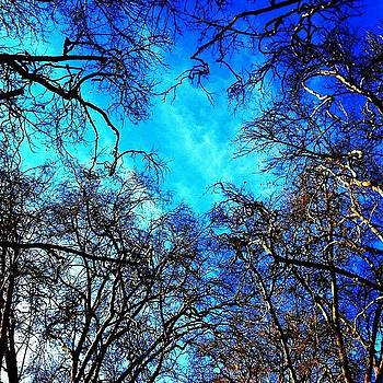 Sactown #fab40 #tree #branches #sky by David Williams