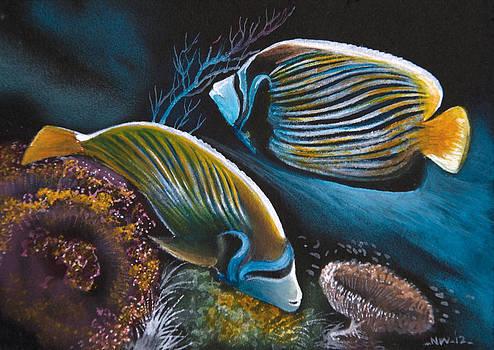 Saddleback Butterflyfish  by Naushad  Waheed