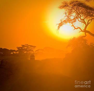 Safari by Konstantin Kalishko