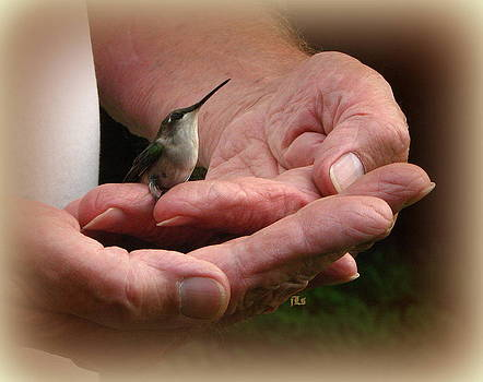 Safe in his hands by June Lambertson