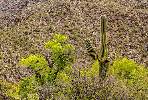 Saguaro and Cottonwood by Beverly Parks
