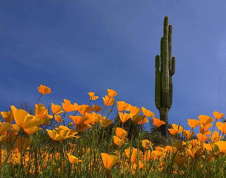 Susan Rovira - Saguaro and Poppies