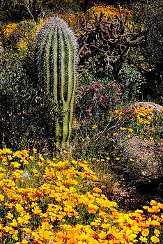 Saguaro and Poppies by T C Brown