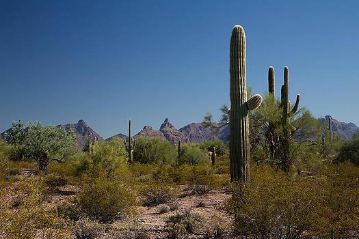 Saguaro by Bob Kemp