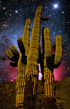 Saguaro Brothers Galaxy by Nick Kanihan