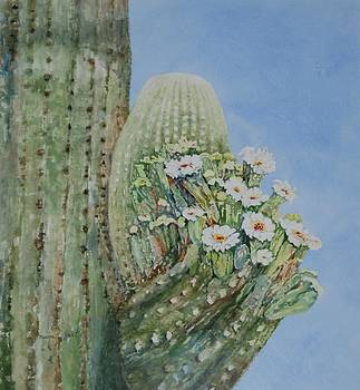 Saguaro Cactus in Bloom by Marilyn  Clement