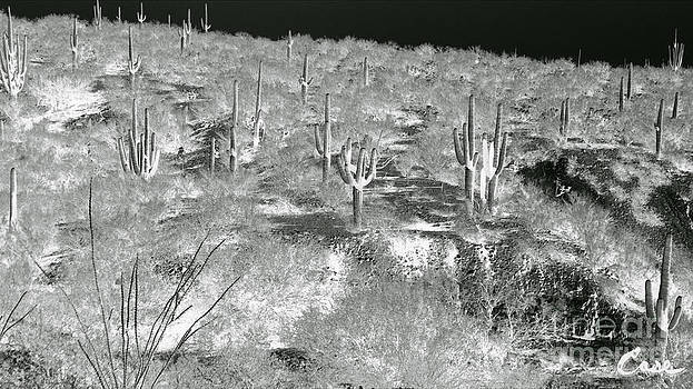 Feile Case - Saguaro Majesty Infrared San Manuel Arizona