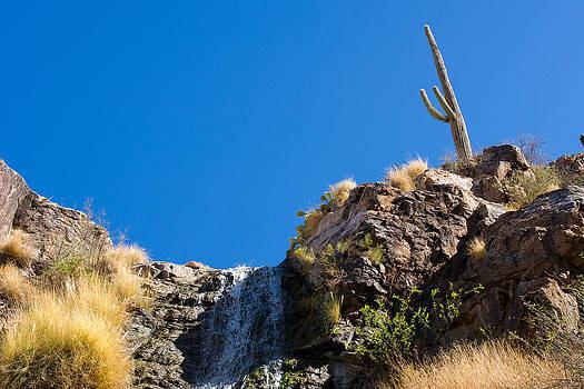 Saguaro by Peter Verdnik