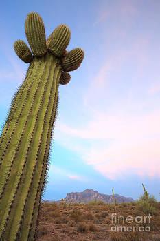 Saguaro Power by Gary Michael Flanagan