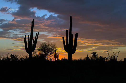 Tam Ryan - Saguaro Sunset