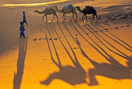 Dennis Cox - Sahara camel shadows