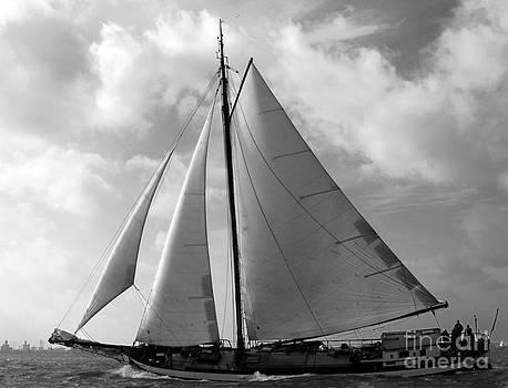 Sail by by Luc Van de Steeg