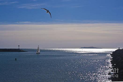 Ian Donley - Sailing on Christmas Ventura Harbor