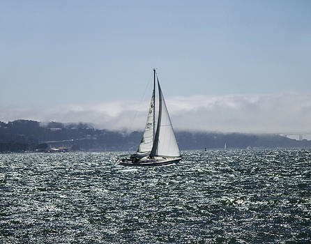 Sailing the SF Bay by Dee  Savage
