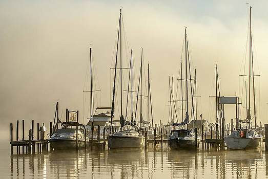 Sailors Delight by David Johnson