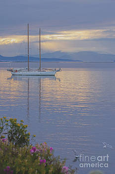 Sail's Down  by Judy Grant
