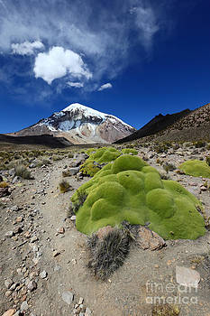 James Brunker - Sajama Volcano and Yareta Plant