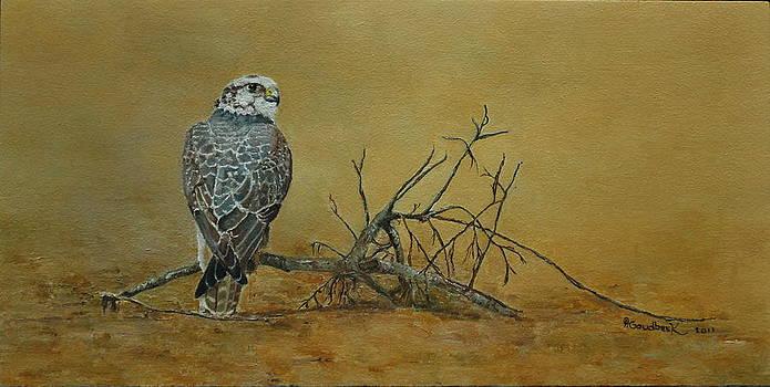 Saker Falcon in desert by Erna Goudbeek