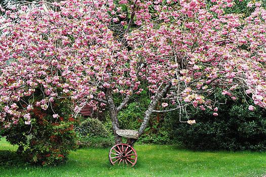 Peggy Collins - Sakura and Wagon Wheel
