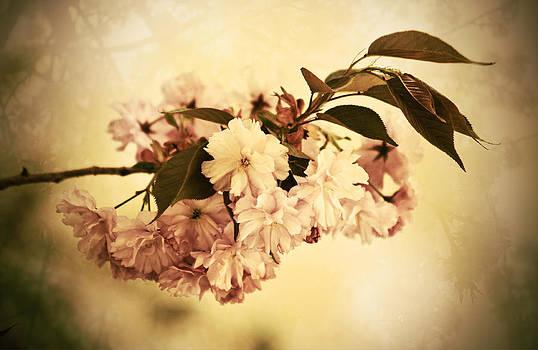 Sakura by AugenWerk Susann Serfezi