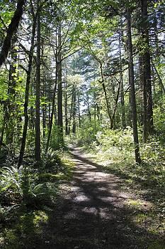 Salmon Creek Trail by Tim Rice