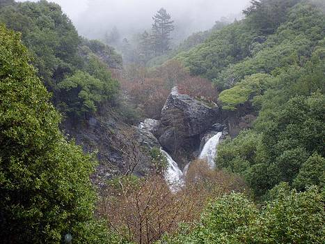 Salmon Falls Big Sur by Laura Young