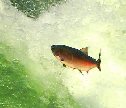Salmon Run 1 by Mamie Gunning
