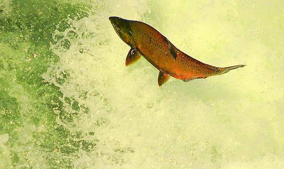 Salmon Run 3 by Mamie Gunning