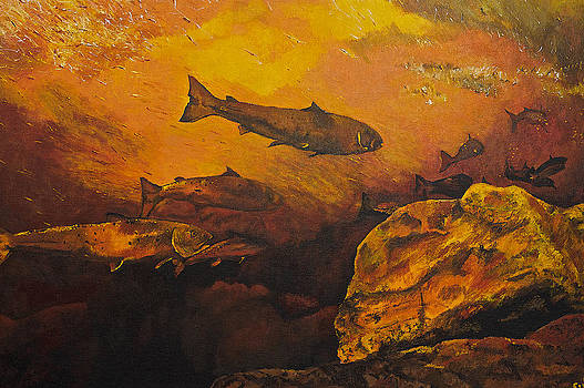 Salmon Run by Terry Gill