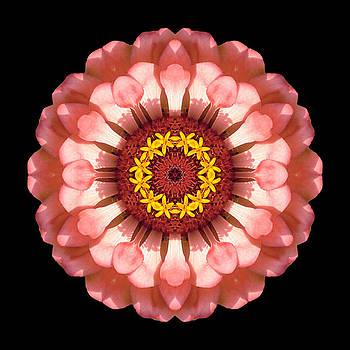 Salmon Zinnia Elegans IV Flower Mandala by David J Bookbinder