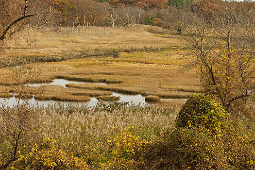 Salt Marsh Crane's Beach by Gail Maloney