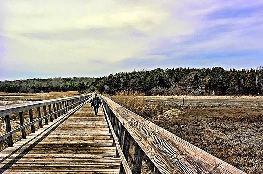 Salt Marsh Eastham Cape Cod Massachusetts by Mike McCool