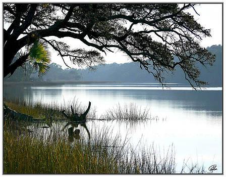 Salt Pond At Hunting Island by Gordon Fritz