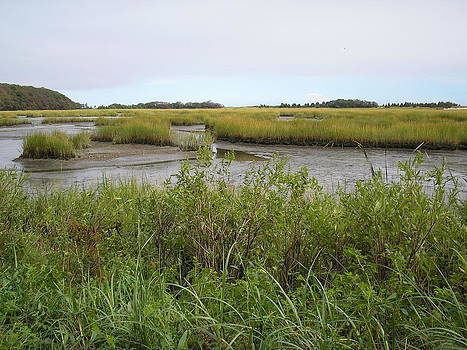 Valerie Bruno - Salt Water Marsh